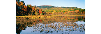 Wetlands and Mt. Monadnock in Fall, Troy, NH