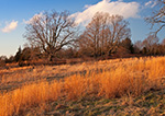 Late Evening Light on Grasses in Old Pasture, Preston, CT