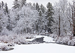 Woodlands along Lawrence Brook after Fresh Snowfall, Royalston, MA