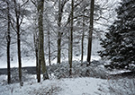 Woodlands in Winter along the Millers River, Athol, MA