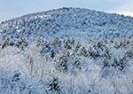 Forests on Tully Mountain after Fresh Snowfall, Orange, MA