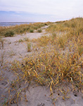 Beach Grass and Dunes, Corson's Inlet State Park, Strathmere Natural Area, Upper Township, NJ