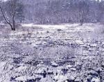 Wetlands after Fresh Snowfall near Lake Dennison Recreation Area, Birch Hill Wildlife Management Area, Winchendon, MA