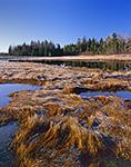 Bass Harbor Salt Marsh with Heavy Frost, Acadia National Park, Mt. Desert Island, ME