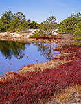 Wild Cranberry Bog and Pitch Pines Surround Freshwater Pond in Inner Dunes, Cape Cod National Seashore, Provincelands, Provincetown, MA