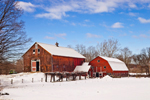 Old Red Barns in Winter, Pioneer Valley, Montague, MA