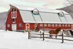 Big Red Barn with Holiday Wreath and Horses in Paddock, Colrain, MA