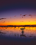 Predawn Light over Wetland Prairie and Red Mangroves, Everglades National Park, FL