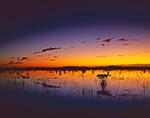 Predawn Light over Wetland Prairie and Red Mangroves (Rhizophora mangle), Everglades National Park, FL