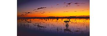Predawn Light over Wetland Prairie and Red Mangroves, Everglades National Park, FL
