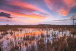 Wetland Prairie at Predawn, Pa-hay-okee Area, Everglades National Park, FL