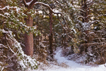 Trail through Snow-Covered Pines, Chincoteague National Wildlife Refuge, Assateague National Seashore, VA