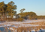 Snow-covered Marsh, Chincoteague National Wildlife Refuge, Assateague National Seashore, VA