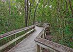 Wooden Boardwalk on Mahogany Hammock Trail, Mahogany Hammock Area, Everglades National Park, FL