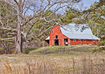 Red Barn and Old Oak Tree in Sunlight, Haralson County, GA