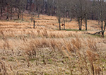 Dried Grasses in Old Pasture, Floyd County, GA