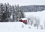Little Red Covered Bridge with Snow-covered Spruce Trees after Heavy Snowfall, Wilmington, VT