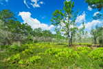 Overview of Saw Palmetto and Slash and Longleaf Pine Forest, Bradwell Bay Wilderness, Apalachicola National Forest, Gulf Coast, Florida Panhandle, Wakulla County, FL