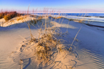Late Afternoon Light on Dunes, Pea Island National Wildlife Refuge, Cape Hatteras National Seashore, Outer Banks, NC