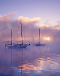 Sailboats in Morning Ground Fog, Connecticut River, Essex, Connecticut