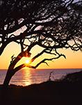 Live Oaks on Driftwood Beach at Sunrise, Jekyll Island, GA