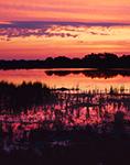 Prairie Pothole Marsh at Sunrise near Clanwilliam, Manitoba, Canada