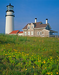 Cape Cod Light and Wildflowers, Cape Cod National Seashore, Truro, MA
