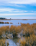 Salt Marsh, Fleet Island, Chesapeake Bay, Lancaster County, VA