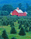 Christmas Tree Farm and Red Barns, Springfield, VT