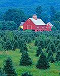 Christmas Tree Farm and Red Barns, Springfield, VT