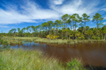 Salt Marsh with Pine Trees and Palm Trees, Gulf Coast, Florida Panhandle, Gulf City, FL