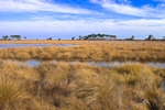 Freshwater Marsh with Pine Hammock in Distance near Headquarters Pond, St. Marks National Wildlife Refuge, Gulf Coast, Florida Panhandle, Wakulla County, FL