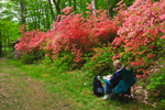 Artist at Work and Flame Azaleas along Path in Moore State Park, Paxton, MA