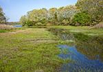 Tidal Creek, Salt Marsh and Oak Trees in Early Spring on Ram Island, Point Judith Pond, Narragansett, RI