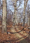 Early Spring along the Appalachian Trail through Oak Forest in Shenandoah National Park, Blue Ridge Mountains, Rappahannock County, VA