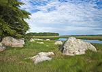 Salt Marsh in Barn Island Wildlife Management Area, Stonington, CT