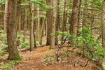 Eastern Hemlock Forest near Bearsden Conservation Area, Athol, MA