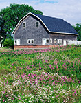 Barn, Fireweed and Valerian, Jonesport, ME