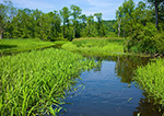 Marsh and Small Creek in Seldon Neck State Park (off Connecticut River), Lyme, CT
