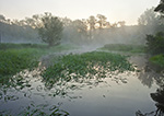 Marsh with Early Morning Ground Fog at Sunrise, Seldon Neck State Park (off Connecticut River), Lyme, CT