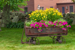Antique Wagon Filled with Flowers, Royalston, MA