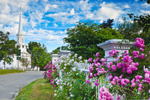 Pink Roses along White Fence and First Congregational Church on Royalston Common , Royalston, MA