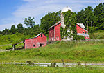 Red Barns and Ivy-covered Silo, Hudson River Valley, Columbia County, Austerlitz, NY