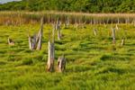 Salt Marsh in Summer, Bay View Marshes, Padanaram, Apponagansett Bay, South Dartmouth, MA