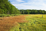 Salt Marsh and Forest in Summer, Bay View Marshes, Padanaram, Apponagansett Bay, South Dartmouth, MA