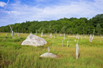 Salt Marsh, Boulders and Forest Edge in Summer, Bay View Marshes, Padanaram, Apponagansett Bay, South Dartmouth, MA