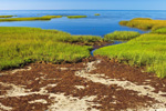 Salt Marsh at Paines Creek Beach and Cape Cod Bay, Cape Cod, Brewster, MA