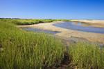 Salt Marsh, Hatches Creek Tidal Creek, and Sand Bars on Barrier Beach, Massachusetts Audubon Society Wellfleet Bay Wildlife Sanctuary, Cape Cod, Wellfleet, MA