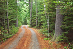 Country Road through Conifer Forest, Lily Bay State Park, Moosehead Lake Region, Beaver Cove Township, ME