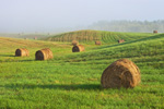 Morning Ground Fog on Rolling Hills with Round Hay Bales, Rural Maine Farmland, Belgrade Lakes Region, Kennebec County, Belgrade, ME